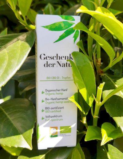 Geschenk der Natur CBD Oel Flasche hinter grünen Blättern in einen Busch